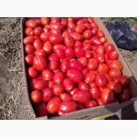 Продам томат (сливку грунтовую)