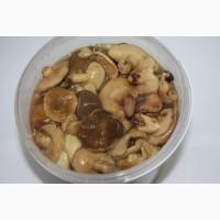 Продам грибы маслята оптом