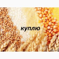 Предприятия Постоянно закупает разные зерновые отходы