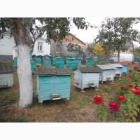 Бджолопакети та бджолосім*ї