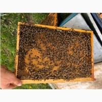 Бджолопакети 2021 Пчелопакеты