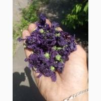 Куплю квіти мальви мавританської