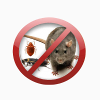 Комплекс послуг Pest Control для підприємств в Києві та Київській області