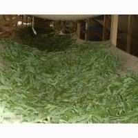 Продам Иван чай(трава-лист)