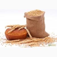 Крупа пшеничная (пшеничка оптом)