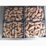 Продам картофель, сорт Американка посадочную и продовольственную