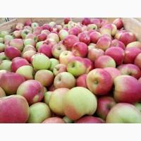 Продам яблоко г.Киев