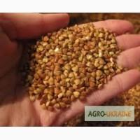 Продам семена гречихи Девятка, Дикуль, Украинка