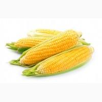 Крупно-оптовая закупка Кукурузы урожай 2017