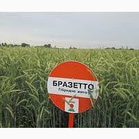 Семена Рожь озимая KWS, насіння жито озиме