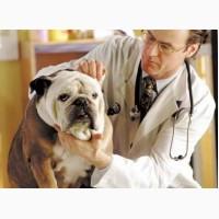 Оптовые поставки ветеринарных препаратов для домашних и с/х животных по Украине