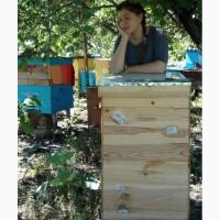 Продам мед разнотравье+подсолнух 300кг