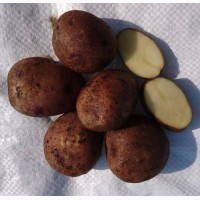 Картопля продовольча бюджетна