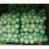 Продаем капусту крупным оптом