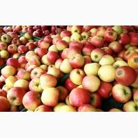 Продам яблоки разных сортов