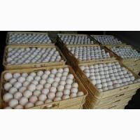 Реализуем оптовые продажи яйцо куриное