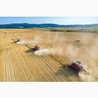 Комбайны в аренду на уборку пшеницы и рапса