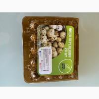 Продам столовые перепелиные яйца оптом