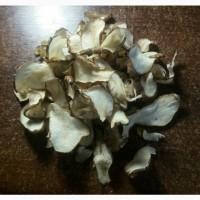 Продам топинамбур (земляная груша). Чипсы