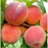 Куплю персик и сливу оптом от 3-х тонн