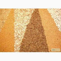 Куплю зерновые оптом