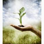 Создание сайтов для агрокомпаний, разработка программного обеспечения
