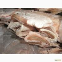 Продам шкіру свинячу