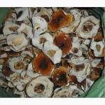 Білі гриби ( шапочка)