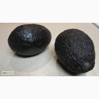 Продам авокадо, сорт Хасс (Hass), оптом и в розницу