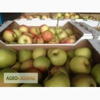 Принимаем на реализацию яблоки