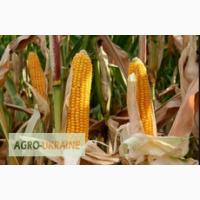 Посевной материал кукуруза Макксалия фао-250 РАЖТ Франция