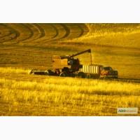 Производим приём Пшеницы по всей Украине