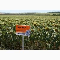 Насіння соняшника Маїсадур Семансас, Maisadour semences Франція, МАС 82А, МАС 24 С, МАС 36