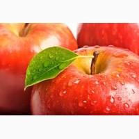 Закупка яблок - крупный опт