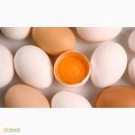 Яйце фермерське