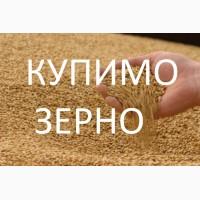 Підпиємство купує дорого пшеницю фуражну