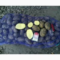 Семянной картофель оптом