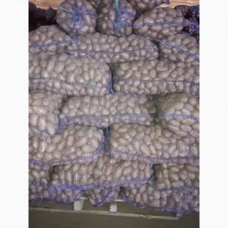 Продам картоплю 100% якість оптом різних сортів