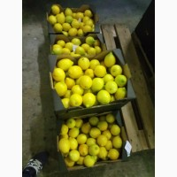 Продаём апeльсины, мандарины, лимоны