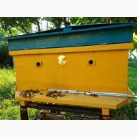 Ульи с пчелами, пчелосемьи, бджоли