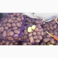 Продам картофель разных сортов идеальное качество