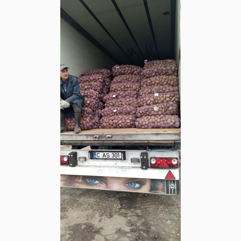 Картопля, картошка, бараболя, картофель, високої якості, в сетках, Винницкая обл.