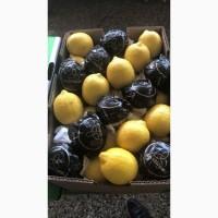 Лимон Египет