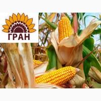 Насіння кукурудзи гібрид Вн 6763