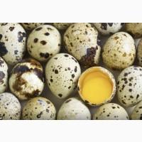 Яйца перепелиные опт и розница. Вся продукция имеет сертификаты качества