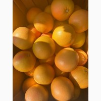 Продам грейпфрут