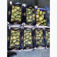 Продам грушу Ноябирська