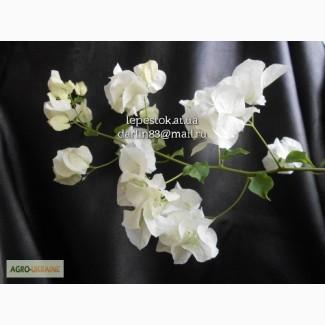 Бугенвиллия белая Mrs.Alice