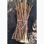 Продам качественные саженцы от производителя черной смородины Тибен и Тисель