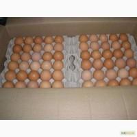 Яйця курячі відбірні та І категорія ОПТ